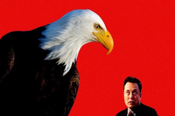 Elon Musk bị điều tra vì cáo buộc thao túng tiền điện tử - Ảnh 1.