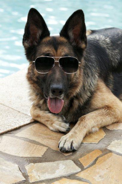 Gia tộc chó giàu nhất hành tinh: Tài sản 400 triệu USD, sở hữu tập đoàn riêng, biệt thự 7000 mét vuông chạy mỏi chân  - Ảnh 2.