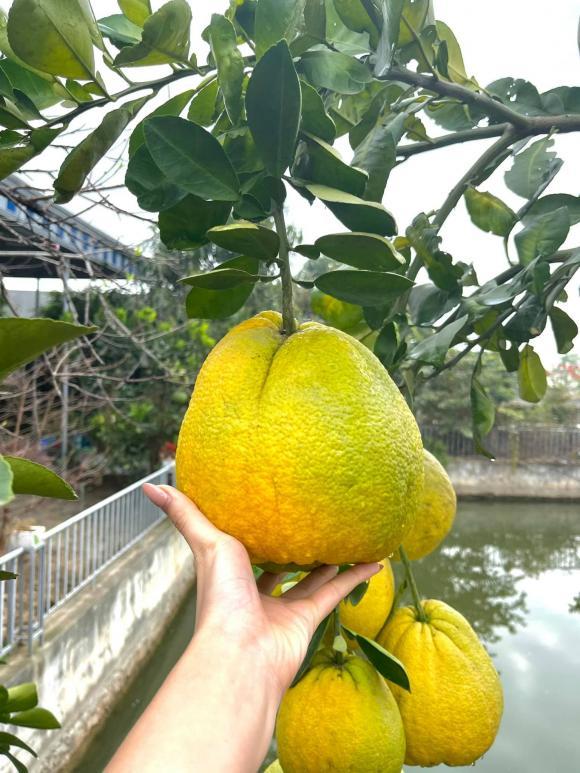 Thăm khu vườn ngập cây trái của Hoa hậu ăn mặc giản dị ngay cả khi đã đăng quang, về quê là chạy ngay ra vườn chụp ảnh check in - Ảnh 8.