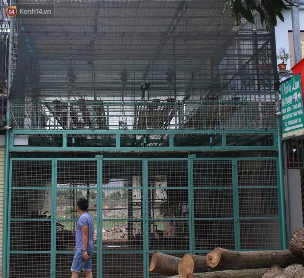 Chủ vườn lan đột biến ở Hà Nội bị tố ôm hàng trăm tỷ bỏ trốn đã ra trình diện công an - Ảnh 1.