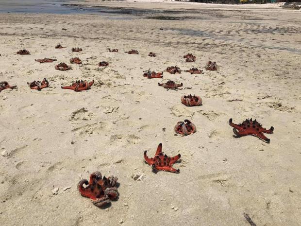 Từ vụ sao biển chết khô ở Phú Quốc: Dân mạng tiếp tục đào thêm hàng loạt hình sống ảo đầy tội lỗi của du khách - Ảnh 2.