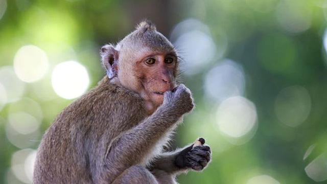 Câu chuyện bán khỉ mua 1 lãi 5 và bài học: Đừng sáng mắt trước những món hời tự nhiên, đồng tiền trên trời rơi xuống là thứ nguy hiểm nhất - Ảnh 1.