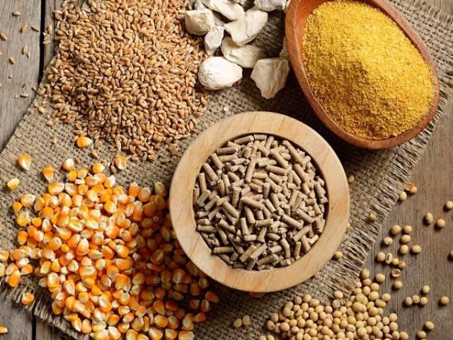 Nguyên liệu thức ăn chăn nuôi tăng cao, vì đâu? - Ảnh 1.