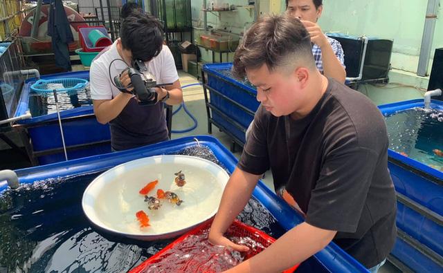 Nghỉ học từ lớp 11 để nuôi cá vàng trên sân thượng, chàng trai khoe doanh thu 100-200 triệu đồng/tháng  - Ảnh 11.