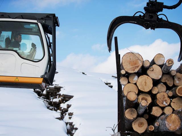 Giá gỗ tăng 280% trong 12 tháng và cơn khủng hoảng chưa có hồi kết của thị trường nhà ở  - Ảnh 1.