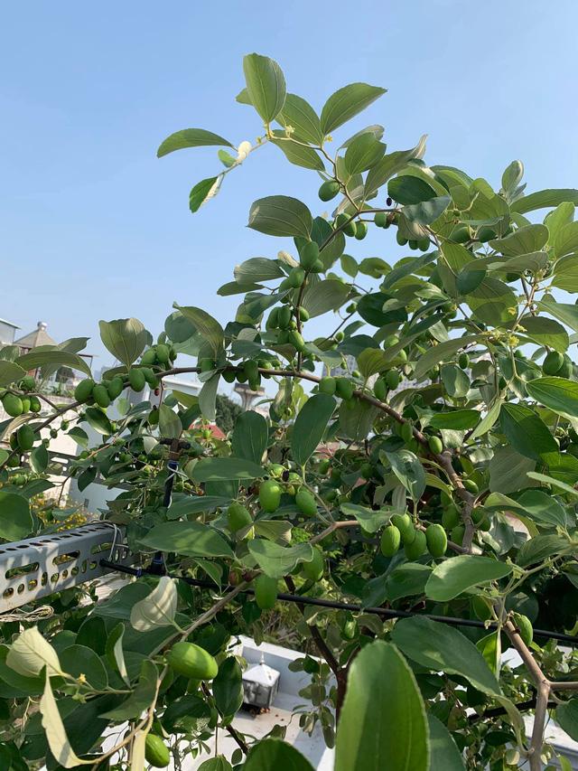 Ngắm vườn dưa lưới trên sân thượng khiến vạn người mê giữa lòng thành phố: Chẳng cần nhà to, nội thất sang trọng, khu vườn xanh mát này là đủ để ai cũng ước ao! - Ảnh 16.