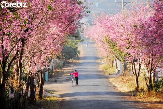 7 cung đường bộ đẹp nhất Việt Nam xuất hiện trên Tạp chí du lịch danh tiếng thế giới: Ngắm cảnh còn ngỡ lạc vào động tiên - Ảnh 4.