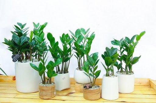 7 loại cây cảnh phổ biến nhưng có độc, nên cân nhắc kỹ trước khi trồng - Ảnh 3.