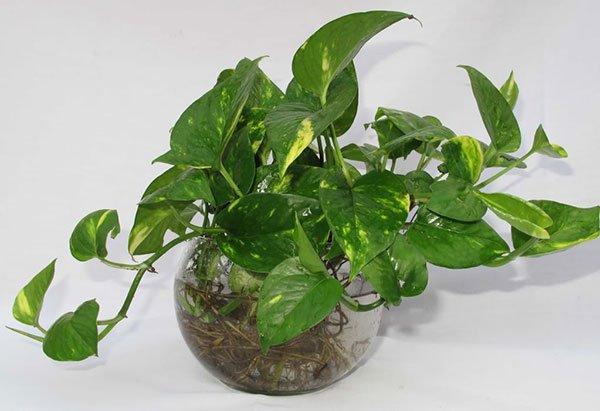 7 loại cây cảnh phổ biến nhưng có độc, nên cân nhắc kỹ trước khi trồng - Ảnh 4.