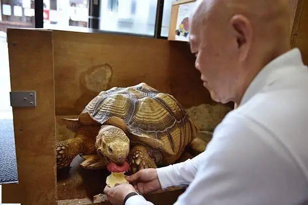 Ông lão người Nhật nuôi con rùa nặng 70kg, quãng đường 5 phút đi mất 3 tiếng: Sống chậm lại, cuộc đời quả thực đáng yêu hơn bạn nghĩ - Ảnh 8.