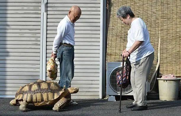 Ông lão người Nhật nuôi con rùa nặng 70kg, quãng đường 5 phút đi mất 3 tiếng: Sống chậm lại, cuộc đời quả thực đáng yêu hơn bạn nghĩ - Ảnh 22.