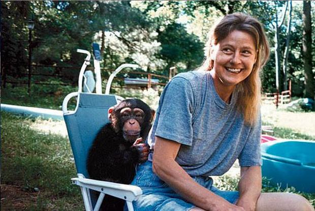 Chuyện về khỉ Travis: Sống như người suốt 14 năm bỗng 1 ngày điên cuồng cắn xé người thân, trước khi chết vẫn cố lê bước về giường của mình - Ảnh 1.