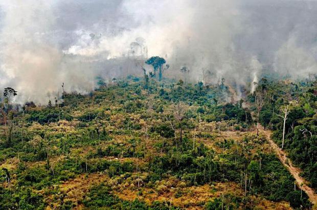 Tin rất buồn: Rừng Amazon chạm đến điểm cực hạn, đang phát thải CO2 còn nhiều hơn khả năng hấp thụ - Ảnh 3.