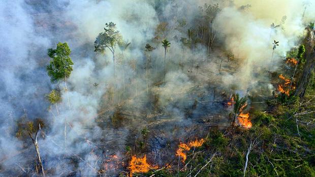 Tin rất buồn: Rừng Amazon chạm đến điểm cực hạn, đang phát thải CO2 còn nhiều hơn khả năng hấp thụ - Ảnh 4.