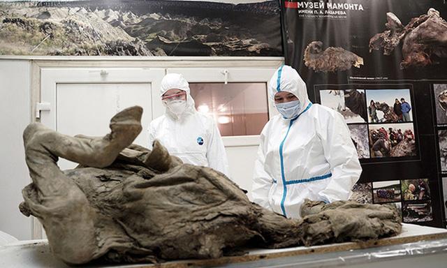 Các nhà khoa học rã băng vĩnh cửu ở Tây Tạng, tìm thấy 28 chủng virus cổ đại chưa từng được biết đến  - Ảnh 1.