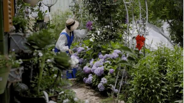 Người phụ nữ bỏ phố về quê để làm vườn hoa 1.500m2 tuyệt đẹp, ngày cao điểm hút 3.000 người đến thăm: Nửa đời người về sau, hãy dành cho chính mình  - Ảnh 16.