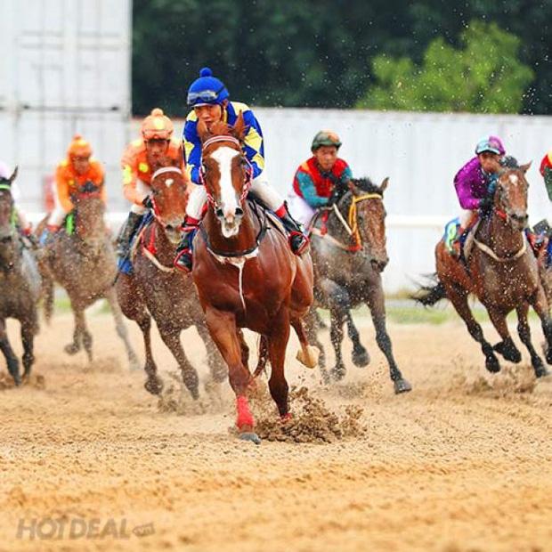 Bí mật của những con ngựa đua bạc tỷ ở Trường đua Đại Nam qua lời kể của đại gia Phương Hằng: Quý vị biết không, tụi nó... - Ảnh 2.
