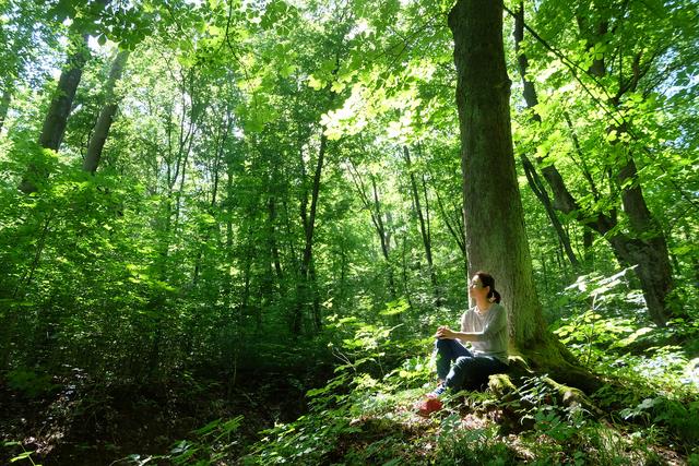 Muốn đầu óc lúc nào cũng thư giãn, hãy mua nhà ở nơi có nhiều cây xanh và áp dụng tắm rừng để giải tỏa căng thẳng: Liệu pháp diệu kỳ đến từ xứ sở mặt trời mọc mà bạn có thể chưa biết!  - Ảnh 1.