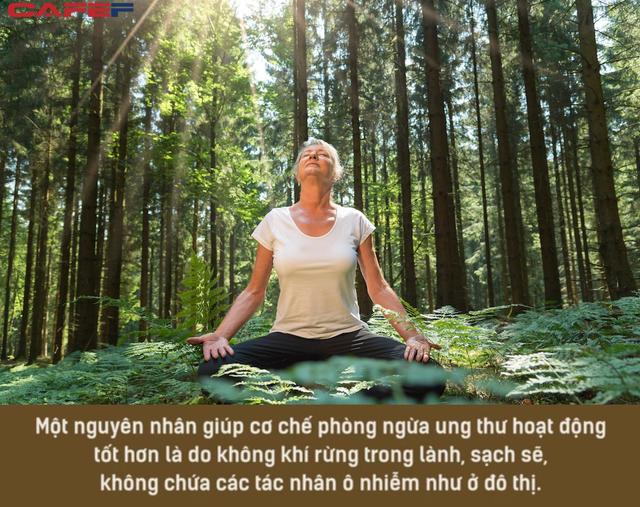 Muốn đầu óc lúc nào cũng thư giãn, hãy mua nhà ở nơi có nhiều cây xanh và áp dụng tắm rừng để giải tỏa căng thẳng: Liệu pháp diệu kỳ đến từ xứ sở mặt trời mọc mà bạn có thể chưa biết!  - Ảnh 2.