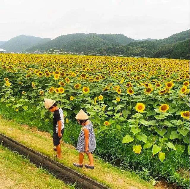 Bỏ việc về quê, nuôi cá và trồng thêm rau: Cuộc sống thảnh thơi, như mơ của đôi vợ chồng khiến nhiều người phát cuồng - Ảnh 14.