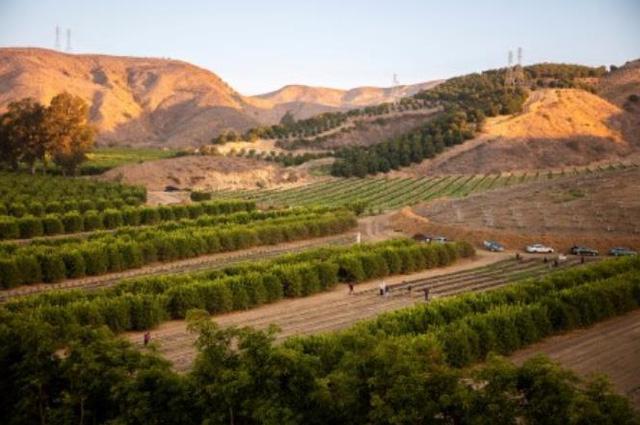 Nước Mỹ và giấc mơ hoang đường… trở thành nước trồng cà phê lớn trên thế giới  - Ảnh 1.