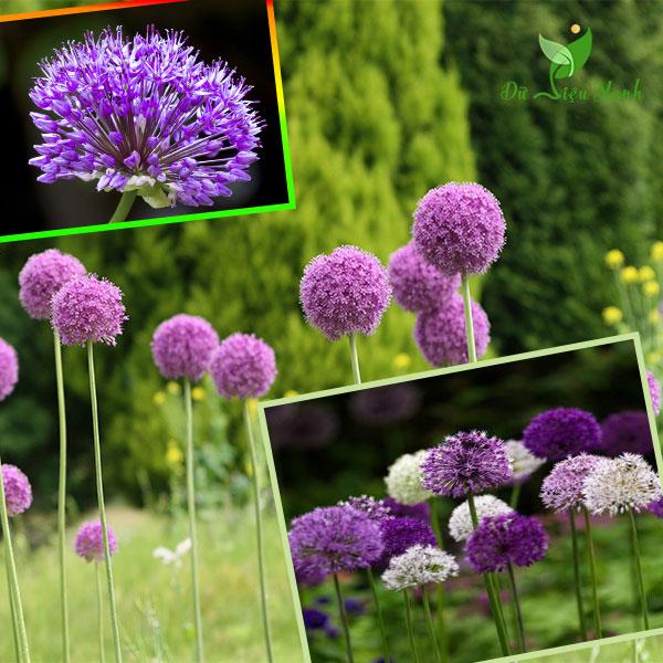 Để giảm stress và thêm yêu đời thì đừng bỏ qua việc trồng 4 loài hoa này trong nhà - Ảnh 2.