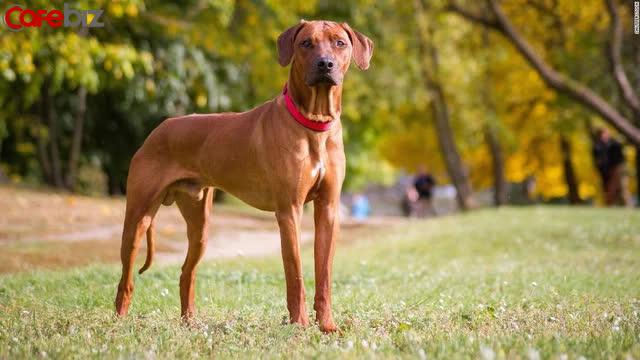 Câu hỏi phỏng vấn: 1 con chó có 4 chân, vậy 50 con chó có bao nhiêu chân? Câu trả lời thú vị khiến người tuyển dụng gật gù tâm đắc!  - Ảnh 2.
