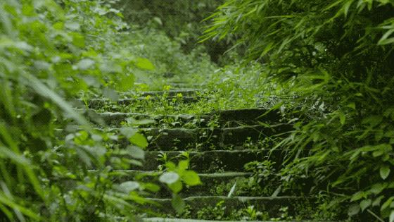 Ngôi nhà vườn khiến ai cũng trầm trồ của nữ biên tập viên rời phố, cùng chồng và bố mẹ về quê sống cuộc đời an nhàn  - Ảnh 3.