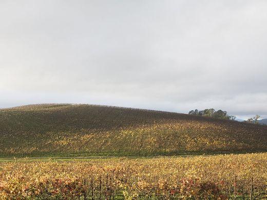 Đây là hình ảnh khu Sonoma County khoảng 10 năm sau khi hình ảnh Bliss được chụp, không còn đồng cỏ xanh rì.