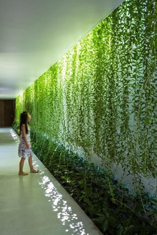 Với 470m2 nhưng có đến hơn 60% không gian cho cây xanh và chỉ còn khoảng 180m2 còn lại được chia thành một phòng khách + bếp, ba phòng ngủ, một nhà kho và ba toilet.