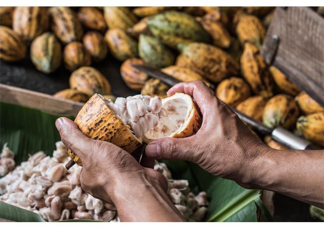 Ông già miền Tây khởi nghiệp tuổi 65: Tôi là người Việt Nam, tôi cũng biết làm socola, mà tại sao để mất vinh dự - Ảnh 2.