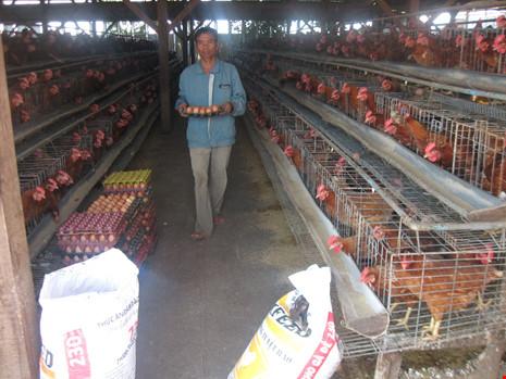 Trước đây các doanh nghiệp, trang trại chăn nuôi trong nước đã phản ứng, đòi kiện chống bán phá giá đùi gà Mỹ khi nhập về cảng Việt Nam với giá khoảng 20.000 đồng/kg.