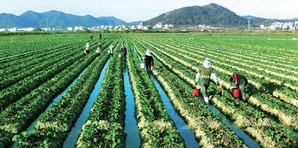 [A Tùng] Việt Nam học được gì từ thành công mở rộng hạn điền Nhật Bản đã đạt được? - Ảnh 3.