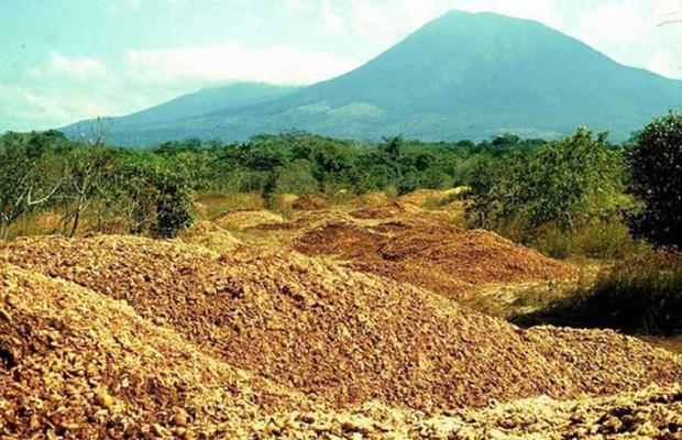 """Một công ty nước ép đổ 12.000 tấn vỏ cam xuống khu bảo tồn thiên nhiên, 19 năm sau, đây là """"hậu quả"""" - Ảnh 1."""