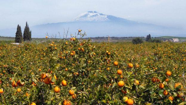 Vỏ và hạt cam: Nguồn cảm hứng kinh doanh ở Sicily - Ảnh 5.