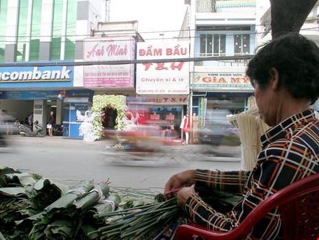 Những người bán lá dong cho biết, lá được lấy ở huyện Hóc Môn đưa lên TP. vào giữa đêm cho kịp bán cả ngày.