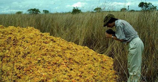 """Một công ty nước ép đổ 12.000 tấn vỏ cam xuống khu bảo tồn thiên nhiên, 19 năm sau, đây là """"hậu quả"""" - Ảnh 2."""