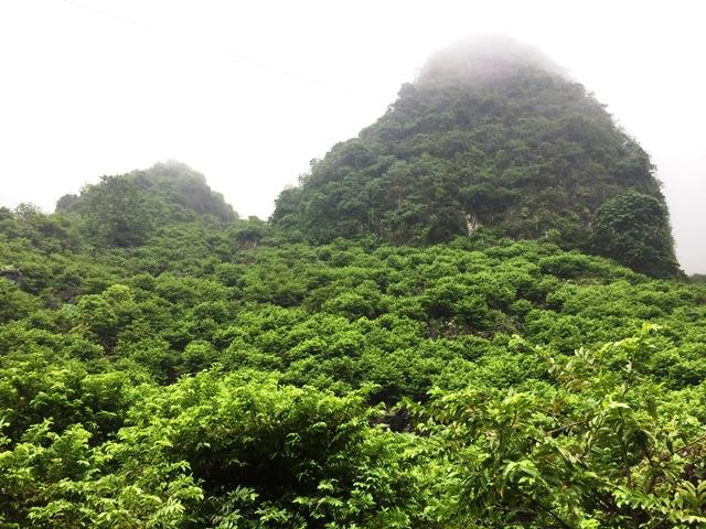 Trồng na trên núi đá cho lương hàng trăm triệu đồng - Ảnh 1.