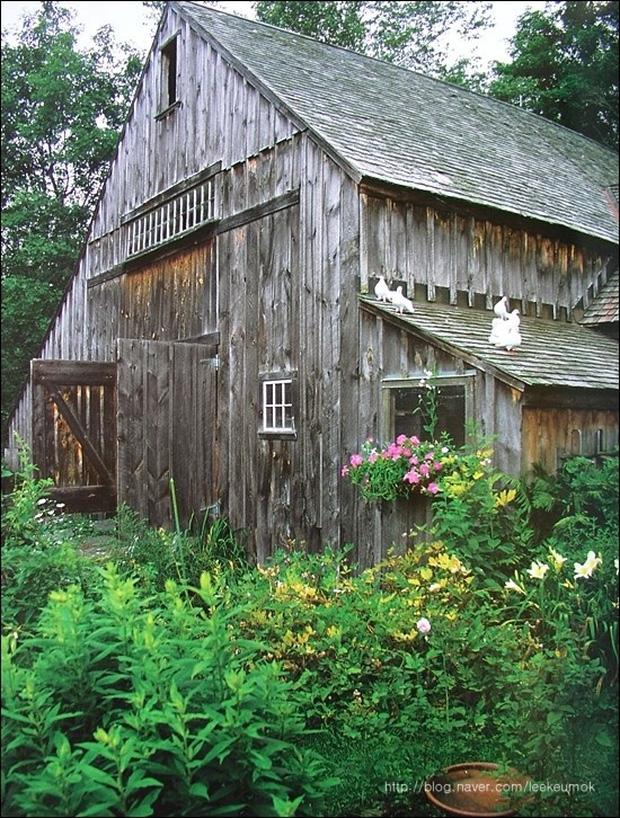 Ngôi nhà gỗ với những ô cửa kính lớn, những chú chim bồ câu hiền hòa trên mái, chẳng khác ngôi nhà bước ra từ chuyện cổ tích.