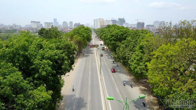 Hà Nội bắt đầu chặt, chuyển hơn 1.000 cây ở đường Phạm Văn Đồng  - Ảnh 1.