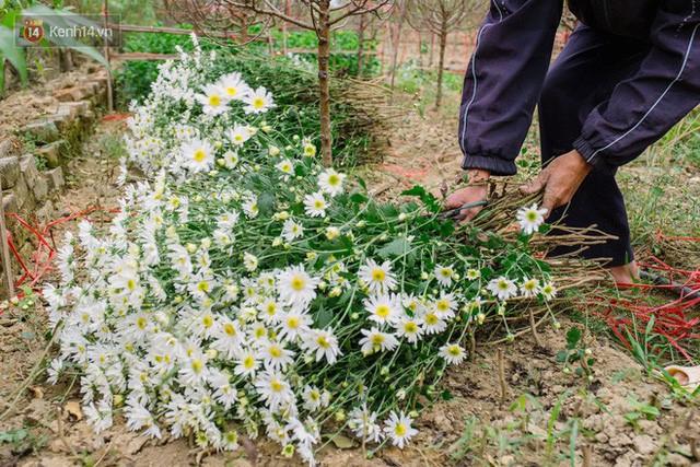 Đằng sau những gánh cúc họa mi trên phố Hà Nội là nỗi niềm của người nông dân Nhật Tân: Không còn sức nữa, phải bỏ hoa về nhà!  - Ảnh 2.