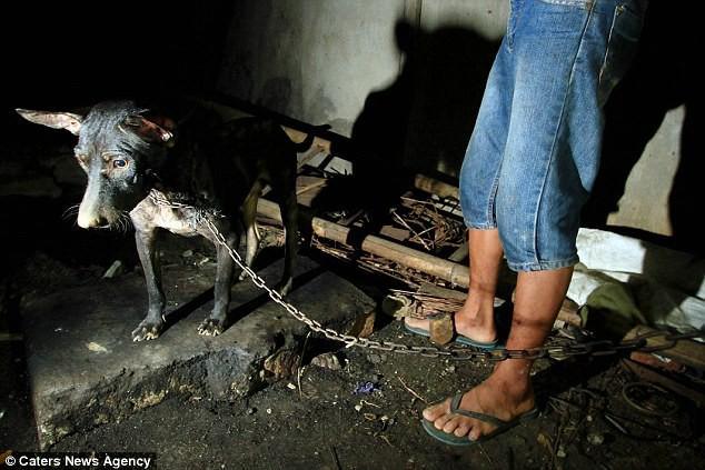 Hình ảnh rùng rợn trong những trang trại thịt chó: Nỗi đau của những chú chó phải chứng kiến cái chết của đồng loại - Ảnh 1.