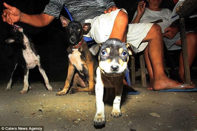 Hình ảnh rùng rợn trong những trang trại thịt chó: Nỗi đau của những chú chó phải chứng kiến cái chết của đồng loại - Ảnh 2.