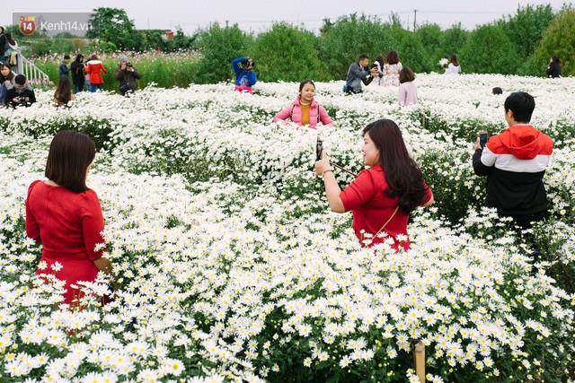 Đằng sau những gánh cúc họa mi trên phố Hà Nội là nỗi niềm của người nông dân Nhật Tân: Không còn sức nữa, phải bỏ hoa về nhà!  - Ảnh 11.