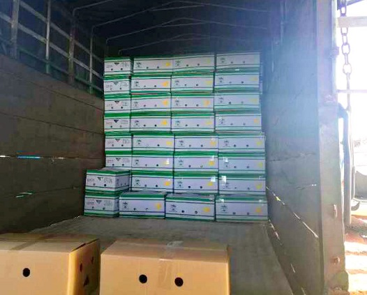 Hoàng Anh Gia Lai bắt đầu thu hoạch chuối, chuẩn bị phân phối qua hệ thống Bách Hóa Xanh - Ảnh 12.