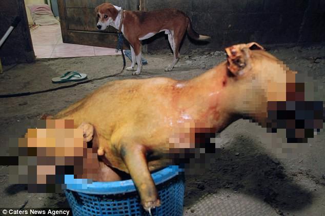 Hình ảnh rùng rợn trong những trang trại thịt chó: Nỗi đau của những chú chó phải chứng kiến cái chết của đồng loại - Ảnh 12.