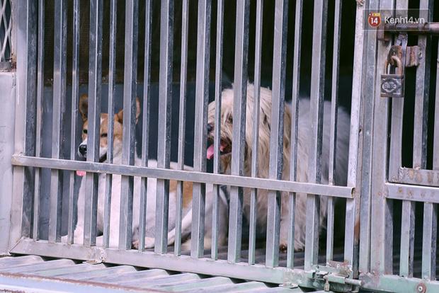 Chó cưng bị Đội săn bắt tóm, cụ bà hớt hải: Nó đi chợ với tôi, đang nằm trên vỉa hè chờ tôi về cùng thì bị bắt - Ảnh 13.