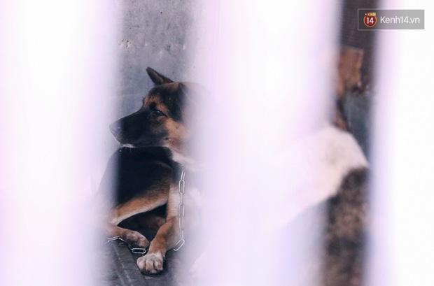 Chó cưng bị Đội săn bắt tóm, cụ bà hớt hải: Nó đi chợ với tôi, đang nằm trên vỉa hè chờ tôi về cùng thì bị bắt - Ảnh 14.