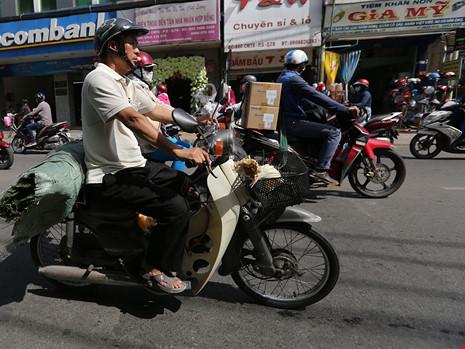 Từng tấm lá theo chân từng người dân về khắp nẻo phố phường.