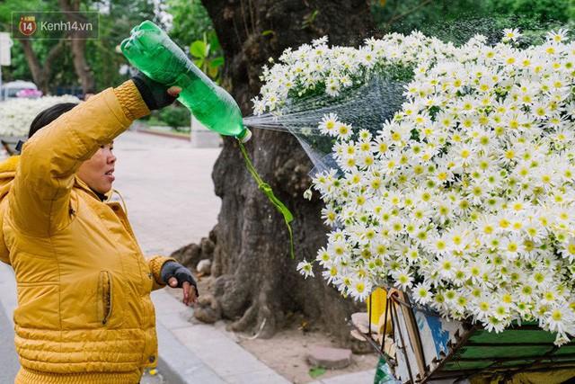 Đằng sau những gánh cúc họa mi trên phố Hà Nội là nỗi niềm của người nông dân Nhật Tân: Không còn sức nữa, phải bỏ hoa về nhà!  - Ảnh 15.